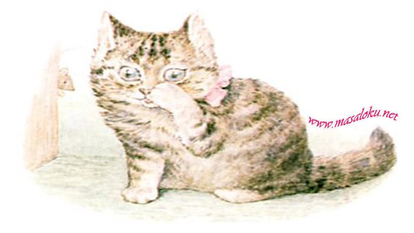 acgozlu-kedi