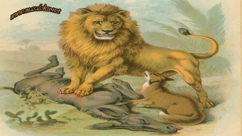 aslan-esek-ve-tilki