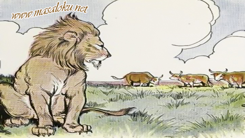 fitneci-aslan